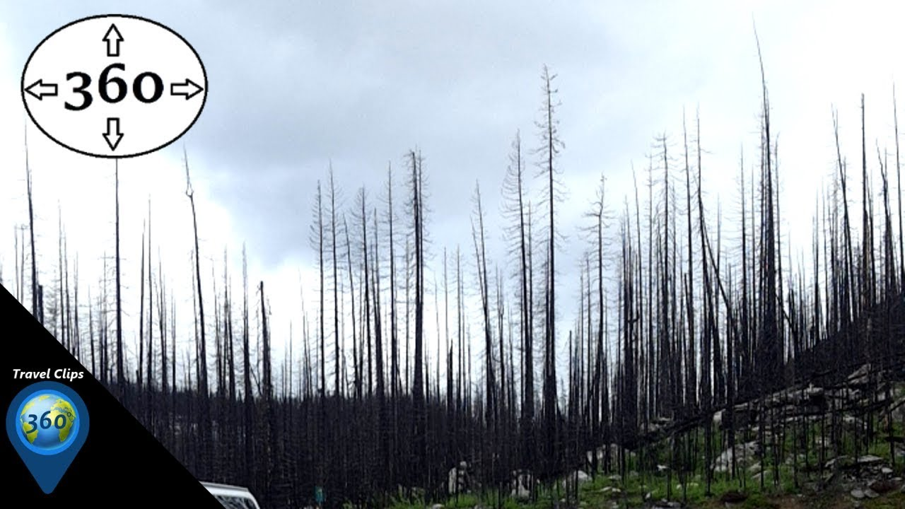 The Lifecycle: Forest Fire Ecology - 360° VR 4K - Travel Clips 360